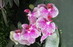 Fascinantes et délicates, les orchidées représentent une des familles les plus diversifiées, comptant plus de vingt-cinq mille espèces, réparties en huit-cent-cinquante genres.