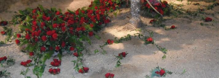 parterre de roses